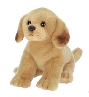 DOG/Sonny Yellow Lab