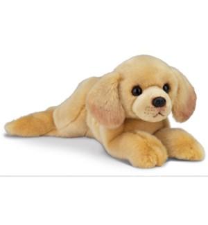 DOG/Tanner (Yellow Lab)