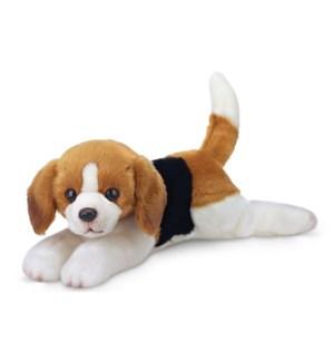 DOG/Hunter (Beagle)