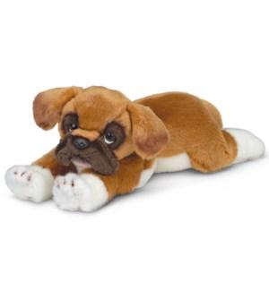 DOG/Roscoe (Boxer)