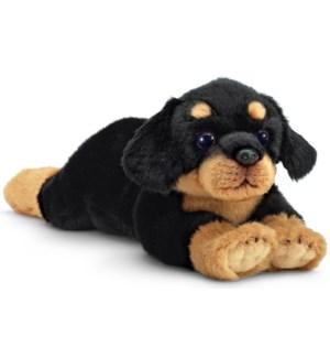 DOG/Gunner (Rottweiler)