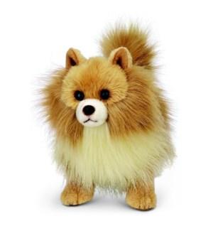 DOG/Rudy (Pomeranian)