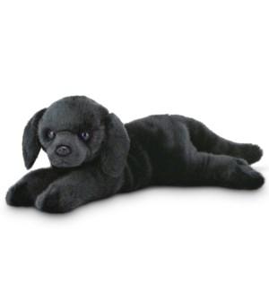 DOG/Jet (Blk Lab)