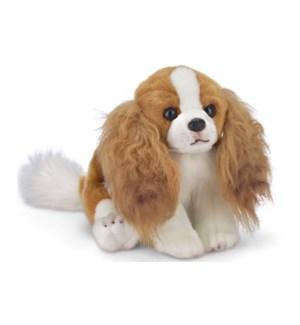 DOG/Sadie (King Charles)