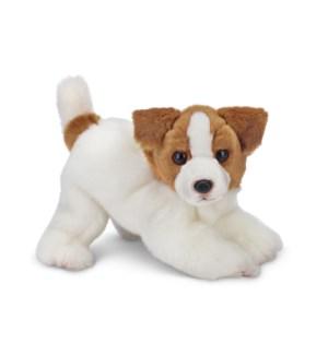 DOG/Jack (Jack Russell)