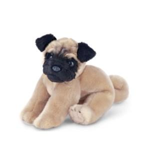 DOG/Pugsly (Pug)