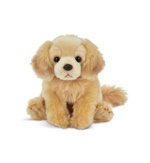 DOG/Goldie