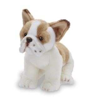 DOG/FRENCHIE (FRENCH BULLDOG)