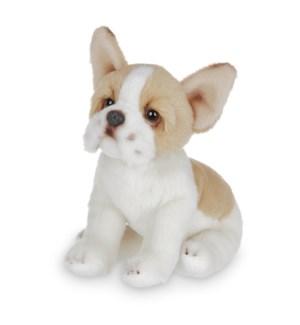 DOG/Lilk' Frenchie