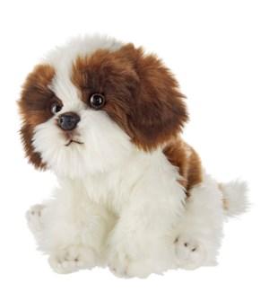 DOG/Bentley Shitzu