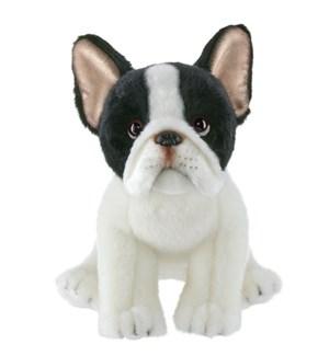 DOG/Oliver French Bulldog