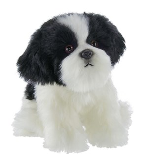 DOG/Butch Havanese