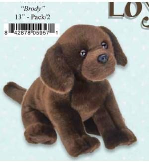 DOG/Brody Chocolate Lab