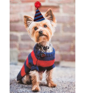 BD/Yorkie With Party Hat