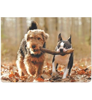 FR/Two Dogs and a Stick