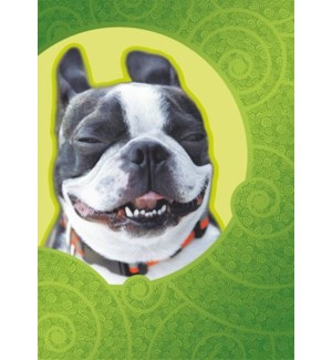 FR/Smiling Dog