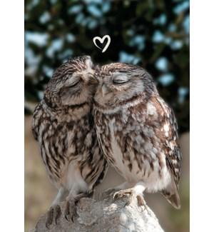 RO/Loving Owls
