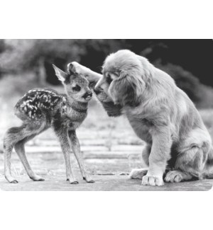 EN/Puppy with Deer