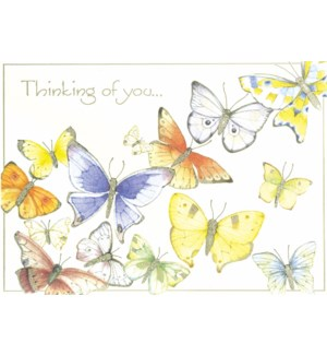 TH/Group Of Butterflies