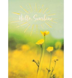TH/Hello Sunshine
