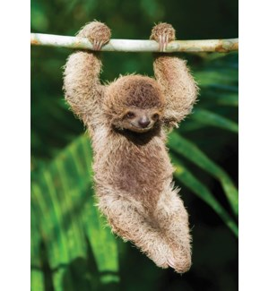 EN/Hang In There Sloth