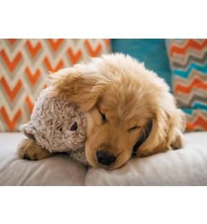 EN/Warm Puppy Hug