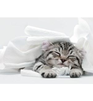 GW/Tuckered Out Kitten
