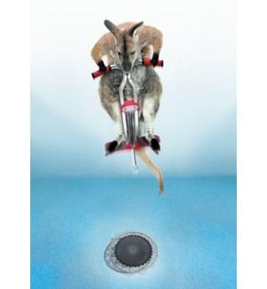 EN/Trampoline Kangaroo