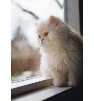 EN/Rainy Days Kitten