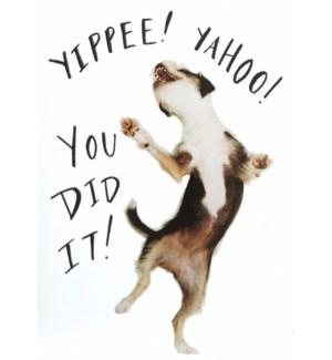 CO/Yippee Yahoo Dog