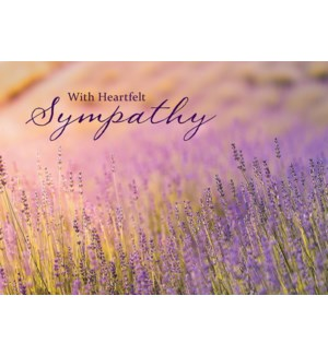 SY/Lavender Fields