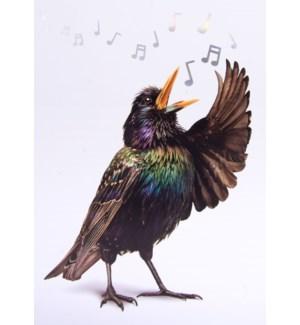TY/Singing Your Praise Bird