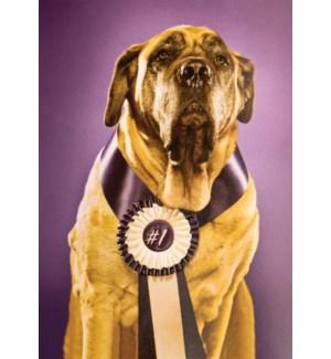CO/Congrats Top Dog