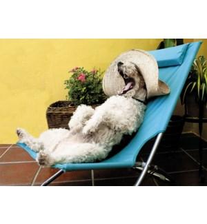 RT/Relaxing Retirement Dog
