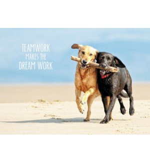 TY/Thank You Teamwork Dogs