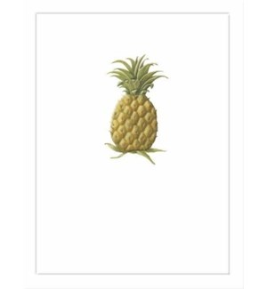 NOTES/BLANK Pineapple