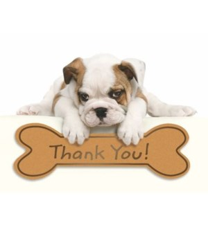 NOTES/TY Bulldog Puppy