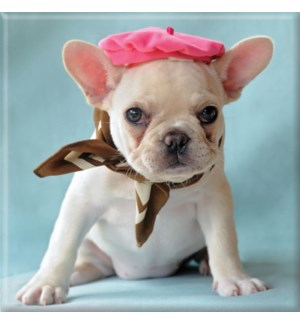 MAG/French Bulldog