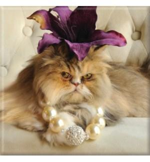 MAG/Cat Fabulous