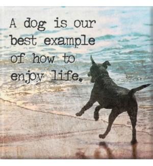MAG/Enjoy Life
