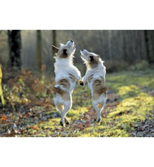 AN/Dogs standing on hind legs