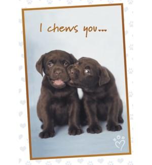 AN/Chocolate lab pups