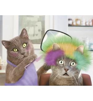 BD/Cat styling cat's hair