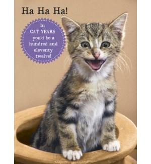 BD/Kitten laughing