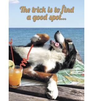 BD/Dog sunbathing & cocktail