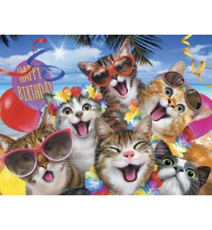 BD/Group of cats on beach