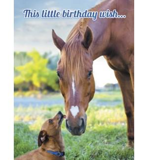 BD/Dog licks nose of horse