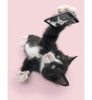 BD/Cat taking selfie
