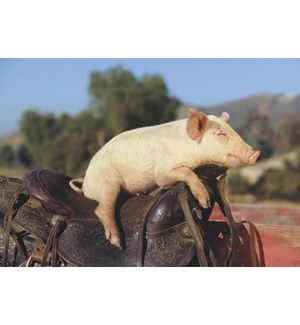 BD/Pig Sitting on Saddle