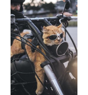 BD/Cat riding on motorcycle